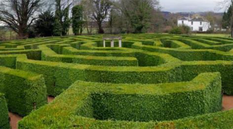 hedge-puzzle